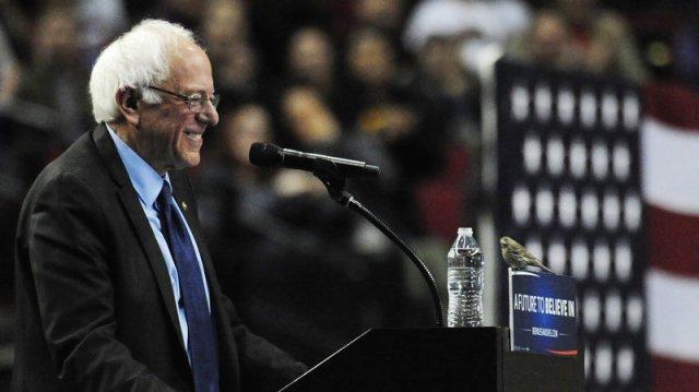 hasta los pajarillos apoyan a Bernie